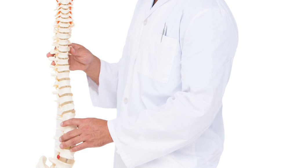 chiropractor showing spine model