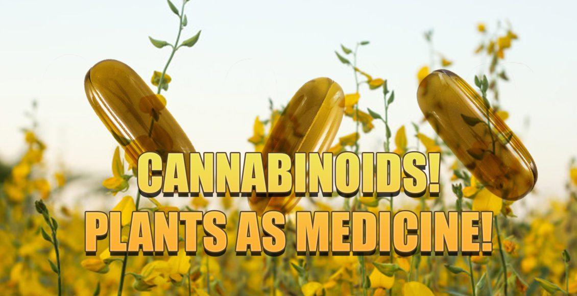 cannabinoides medicina de plantas el paso, tx.