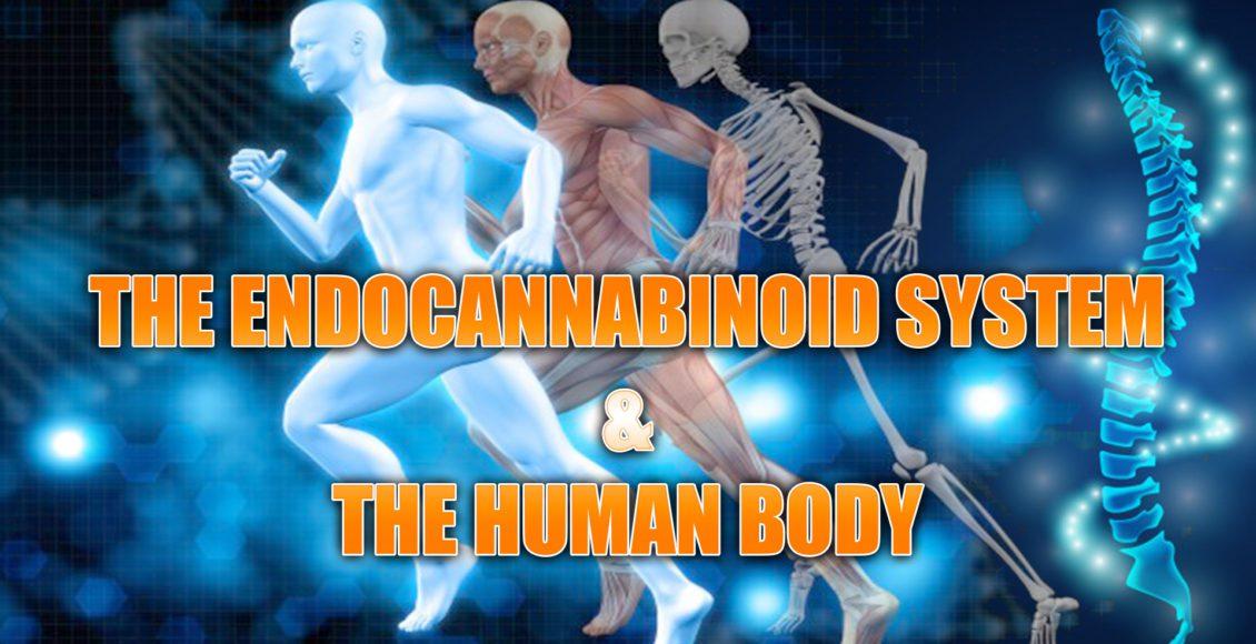 endocannabinoide el paso tx.