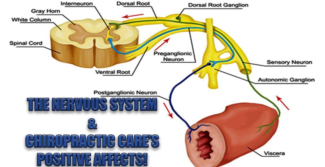 el sistema nervioso y la quiropráctica el paso tx.