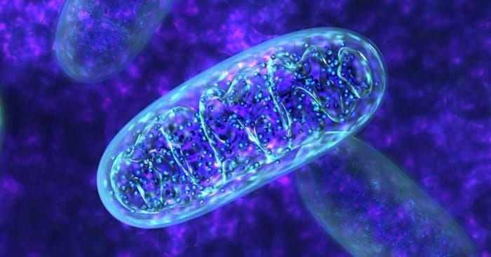 Close up image of mitochondria demonstrating the role of Nrf2.