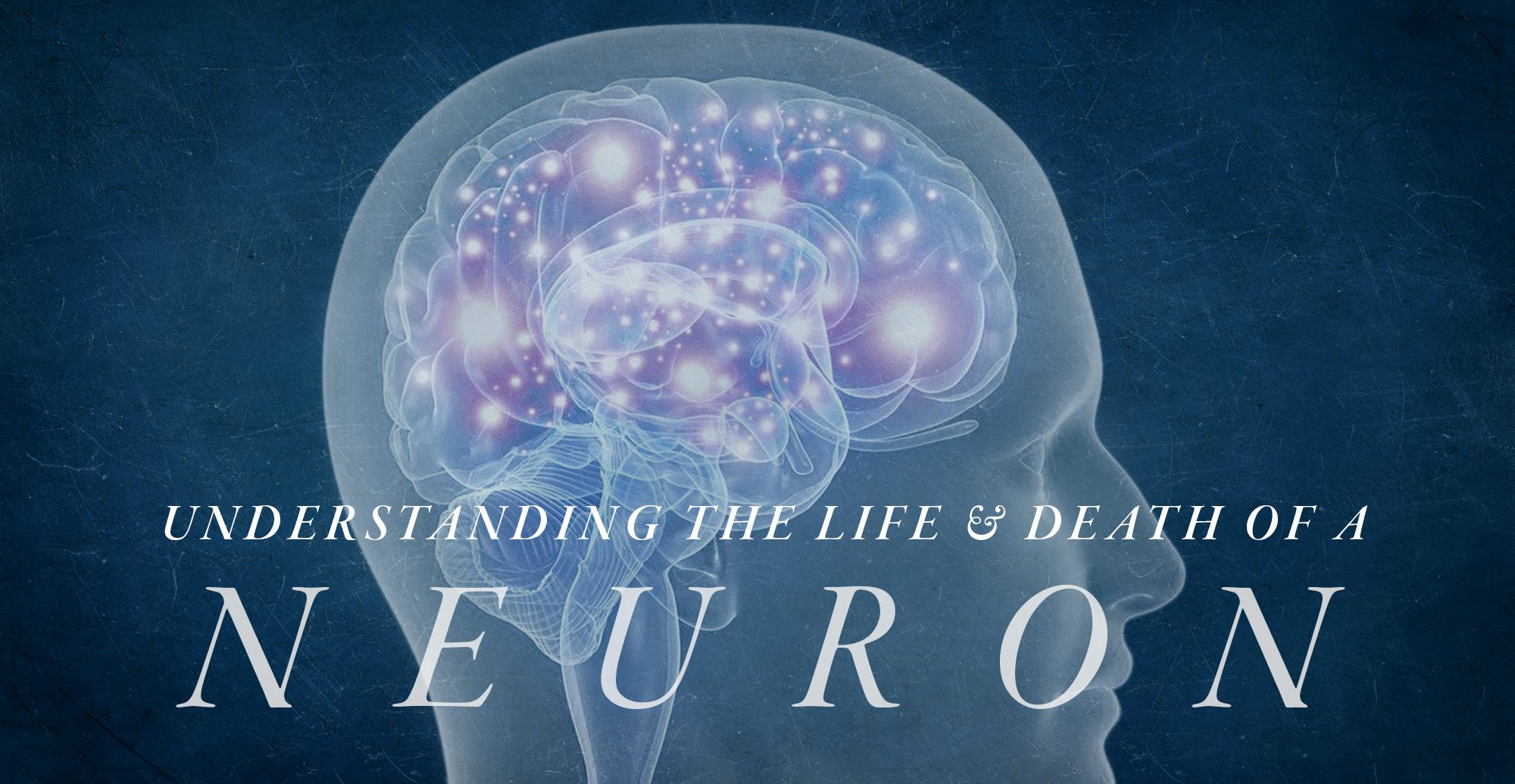Understanding the Life and Death of a Neuron   El Paso, TX Chiropractor