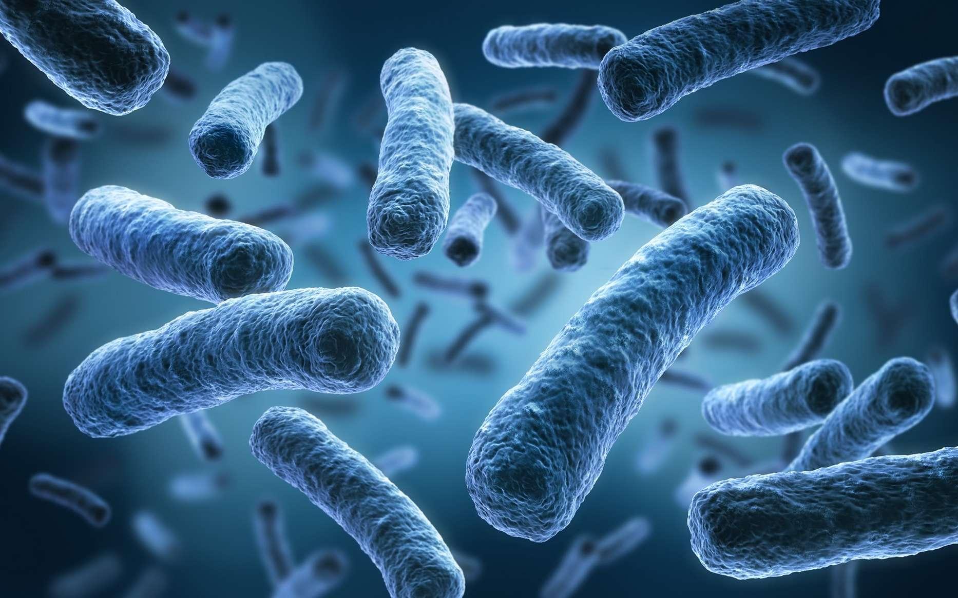 Neurología funcional: el cerebro y la conexión del microbioma intestinal | El Paso, TX Quiropráctico