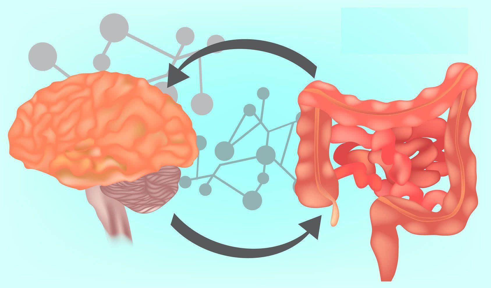 Neurología Funcional: ¿Qué es el eje Gut-Brain? El   El Paso, TX Quiropráctico