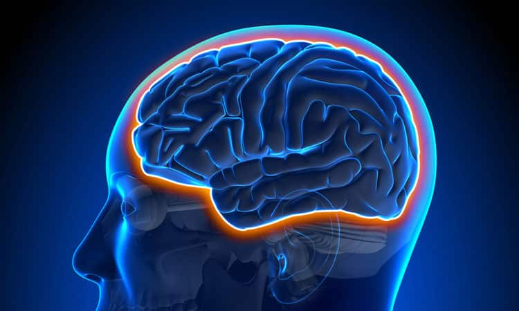Functional Neurology: The Blood-Brain Barrier and Brain Health   El Paso, TX Chiropractor