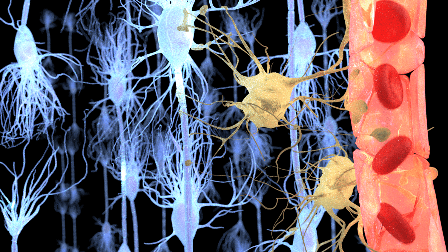 Functional Neurology: What is the Role of the Blood-Brain Barrier? | El Paso, TX Chiropractor