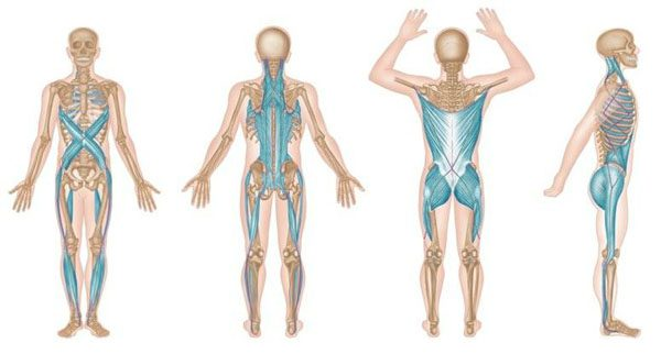 Muscle Cramp and Muscle Spasm: Bio-Chiropractic Insight