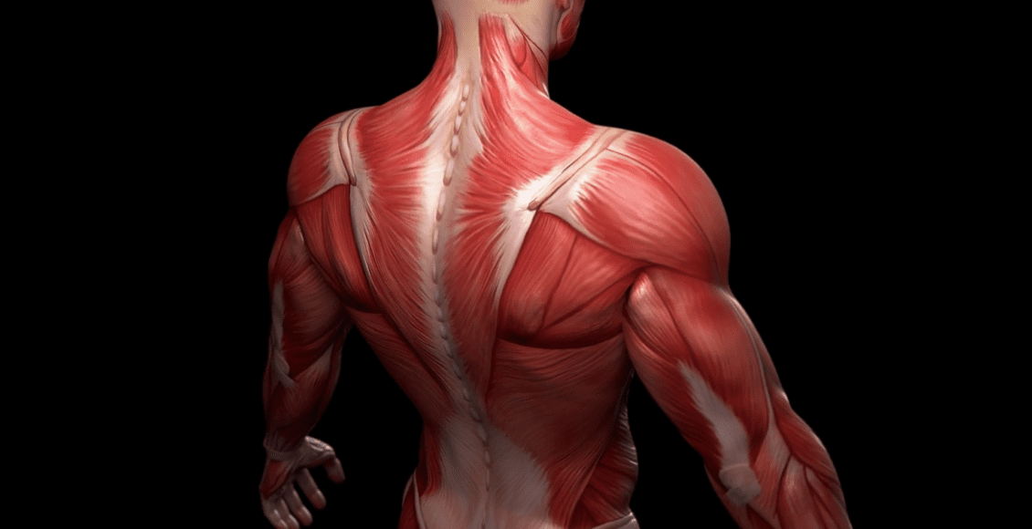 musculoskeletal system and gut health | El Paso TX