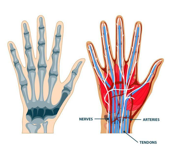 Las manos: lesiones, síntomas, causas, atención médica