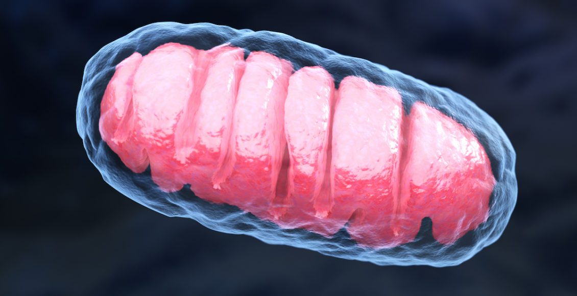 Envejecimiento y longevidad: vías genéticas mitocondriales