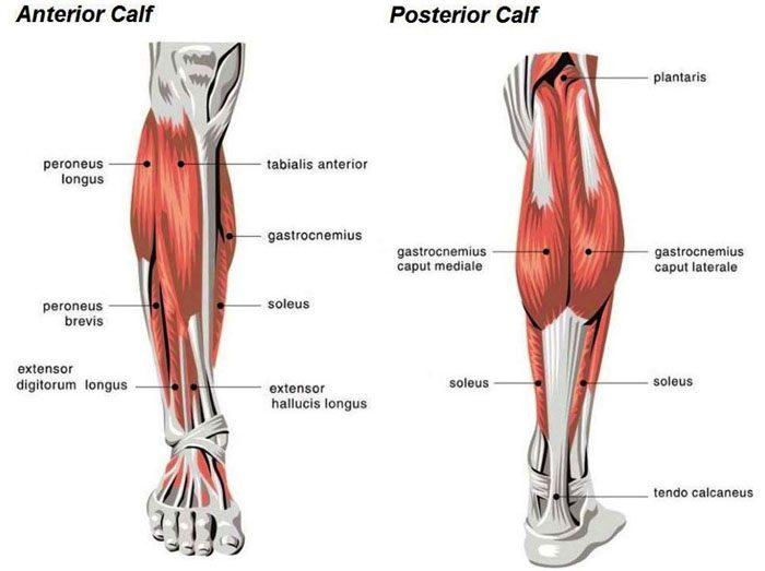 Calf Soreness, Pain and Chiropractic Treatment